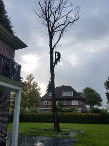 Peters hoveniersbedrijf uit Koudekerk aan den Rijn, het adres voor uw snoeiwerkzaamheden