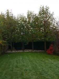 Peters hoveniersbedrijf uit Koudekerk aan den Rijn, het adres voor het maken voor uw tuinonderhoud
